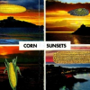 Michael Leigh: Corn Sunsets, UK
