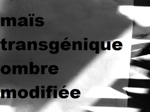Claude Nguyen :: maïs transgénique ombre modifiée 3, Uruguay