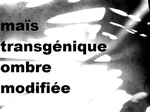 Claude Nguyen :: maïs transgénique ombre modifiée, Uruguay 1