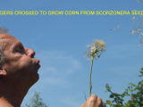 corn-crosses-ever-arts1