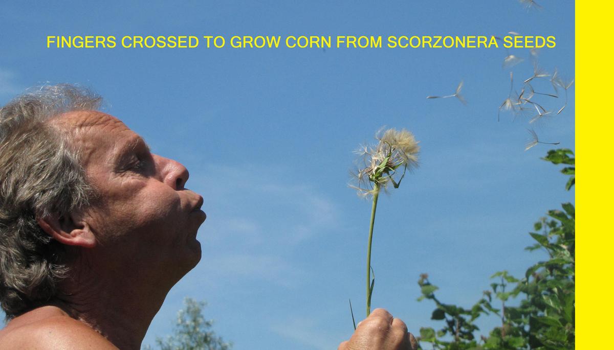 corn-crosses-ever-arts1