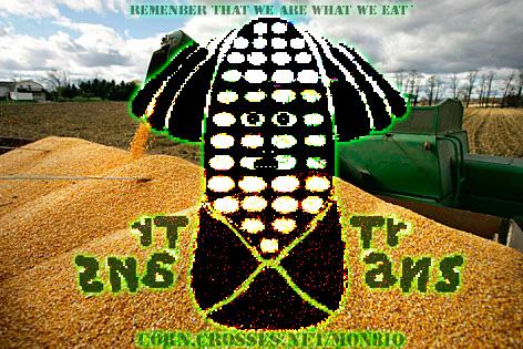 corn-mon810