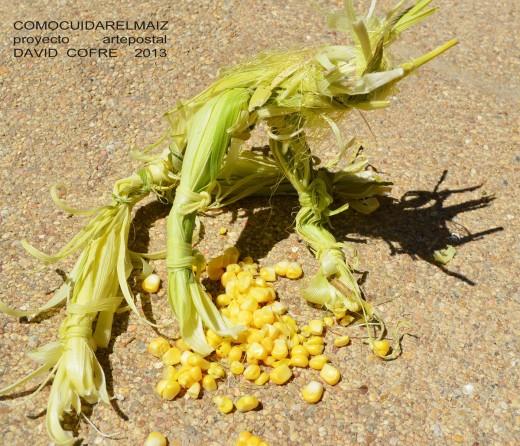 David Cofré :: Como cuidar el maíz, Fotografia, Chile