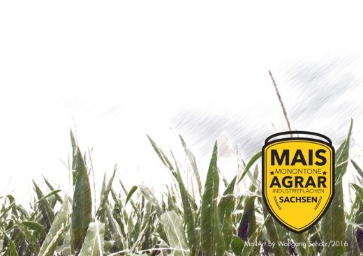 Wolfgang Scholz: Mais aus Sachsen für den Tank