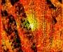 maiz_sol_vida_yto-520x520